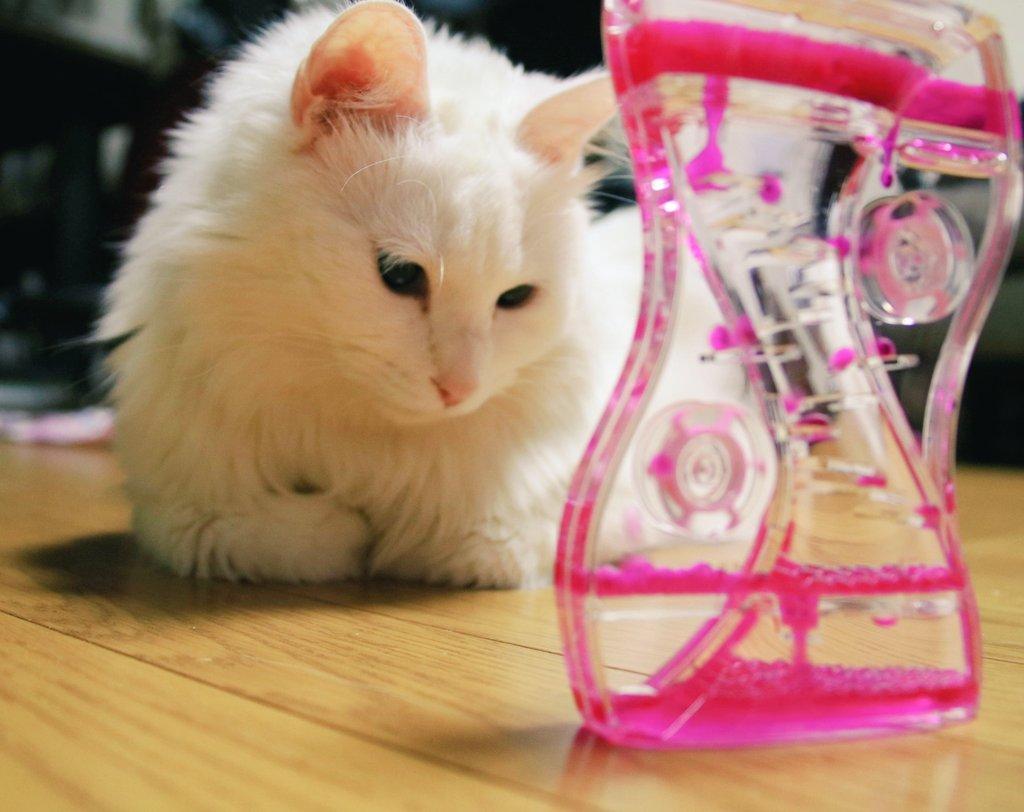これ、もしかして猫が喜ぶんじゃね?と思って100均で買ってみたら、予想以上に30分くらいずっと眺めてて可愛いかったww pic.twitter.com/f9DSPSylOV