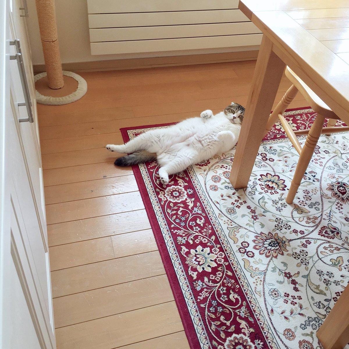 朝キッチンに行ったら、ひとり物思いにおっぴろげてた。 pic.twitter.com/SIydXOJq9y
