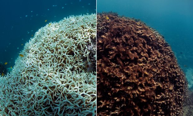 Climate scientists have warned us about #CoralReef bleaching for years. Now, it's here. https://t.co/oKpCtK13UN https://t.co/6Y7QlafxtH