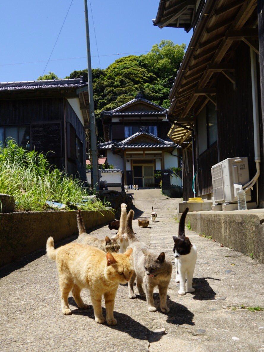 猫がぞろぞろ、ぬらぬら pic.twitter.com/x1RDkt7IvO