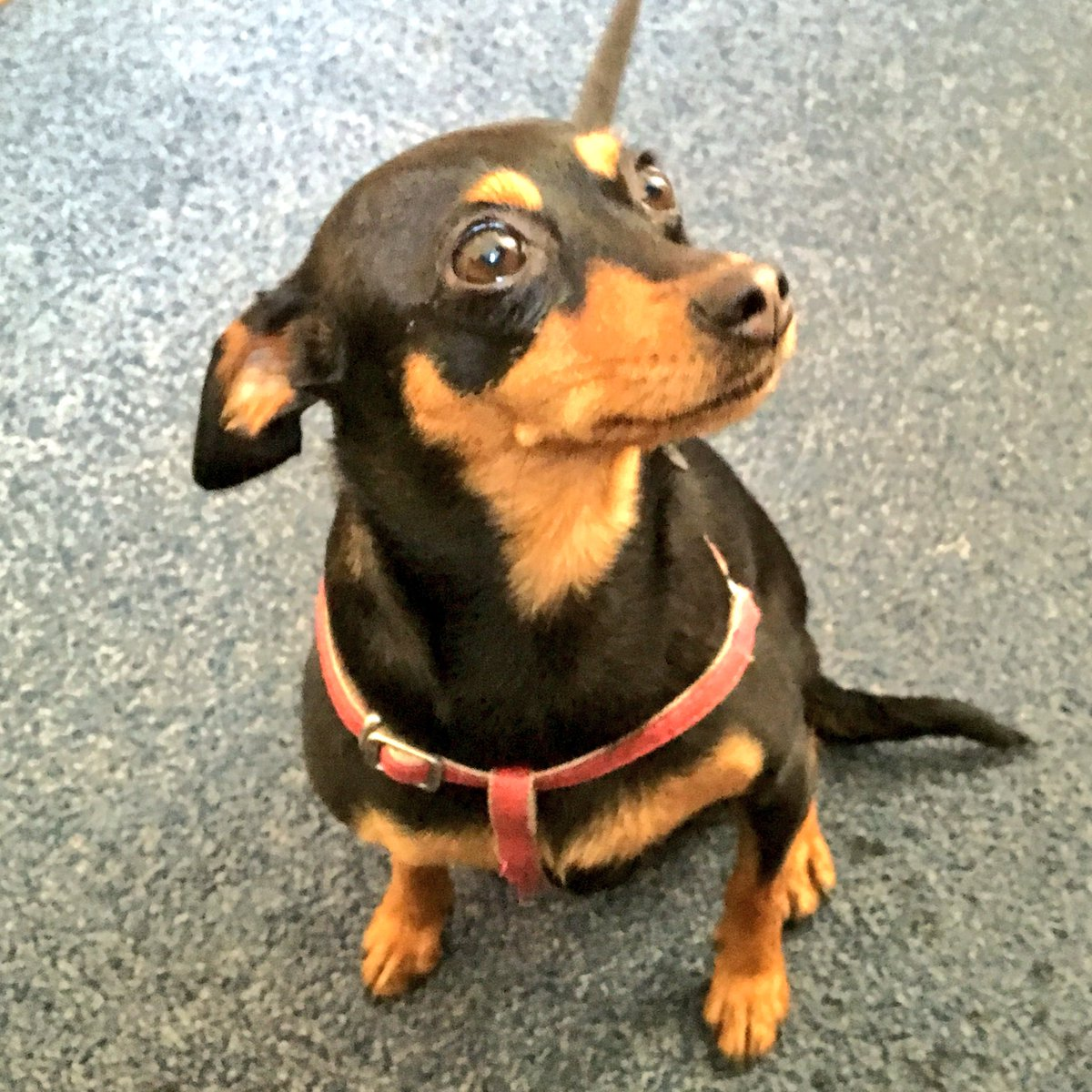 Officers have found this dog in Goldsmith Ave, #Southsea. Are you the owner? Dog is chipped to #Bulgaria *Plz RT* https://t.co/iR7OeVVhbl