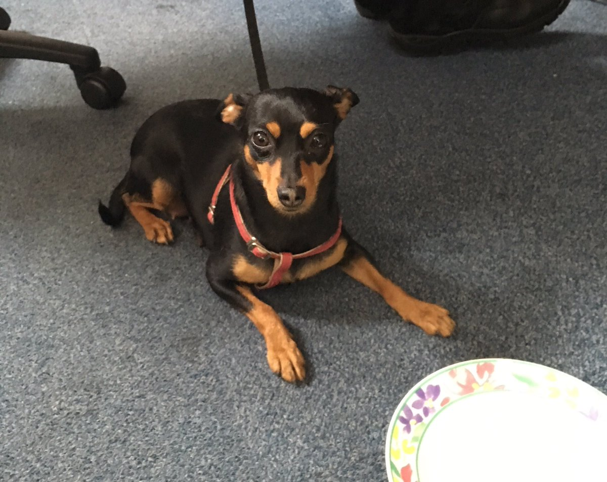 We have now contacted the @portsmouthtoday #DogWarden and this lost little lady is going there. Please Retweet https://t.co/GKrz1lN2QX