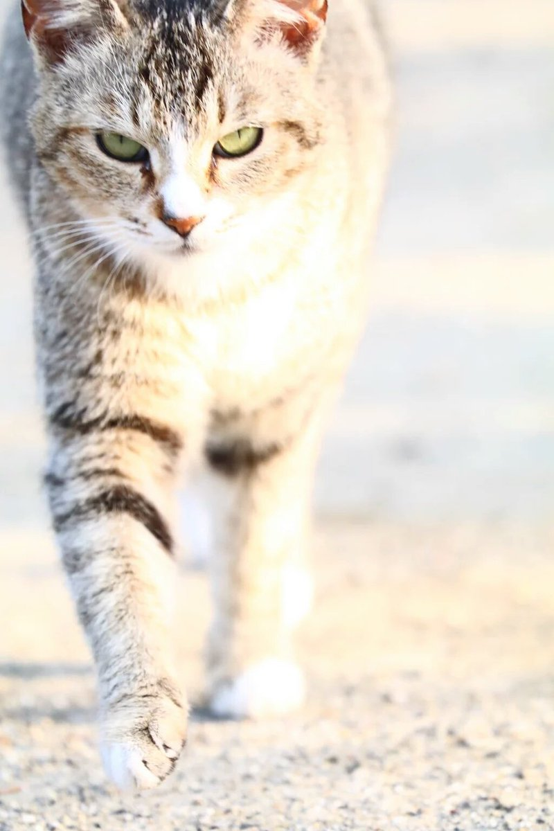 野良猫ですけど。(PAL_saiun)さんより