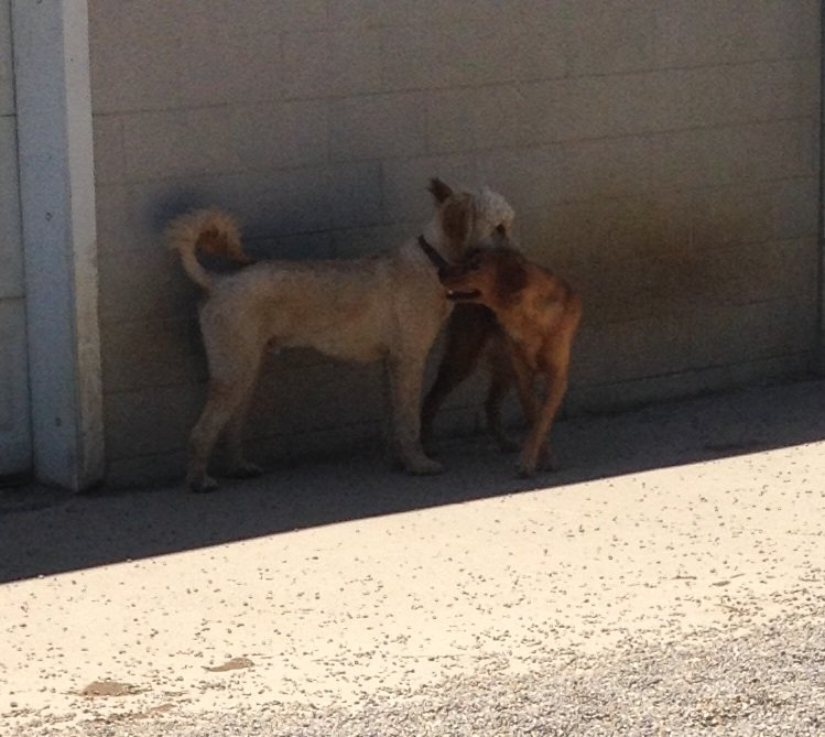 Maggie Mae and Clancy whisper secrets to each other!