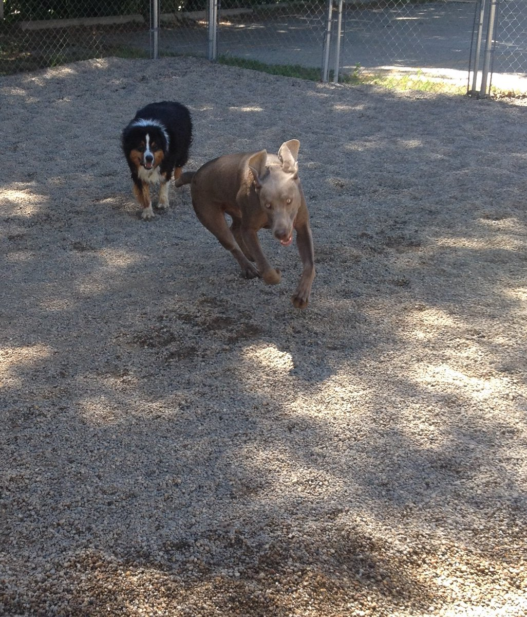 Stitch and Triumph have a race!
