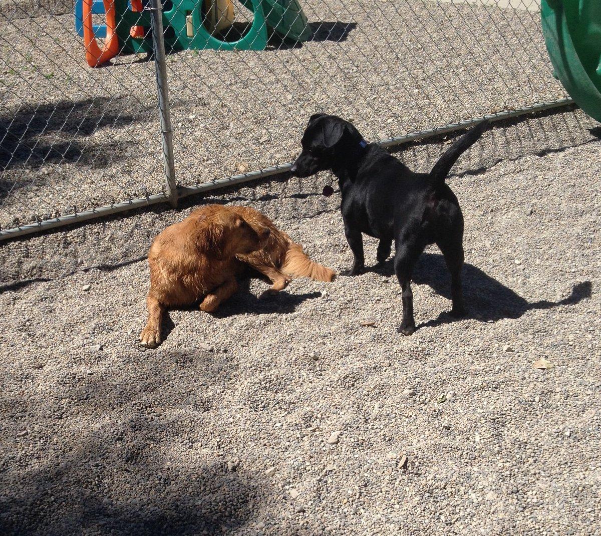 Otis says hi to his friend Maggie Mae