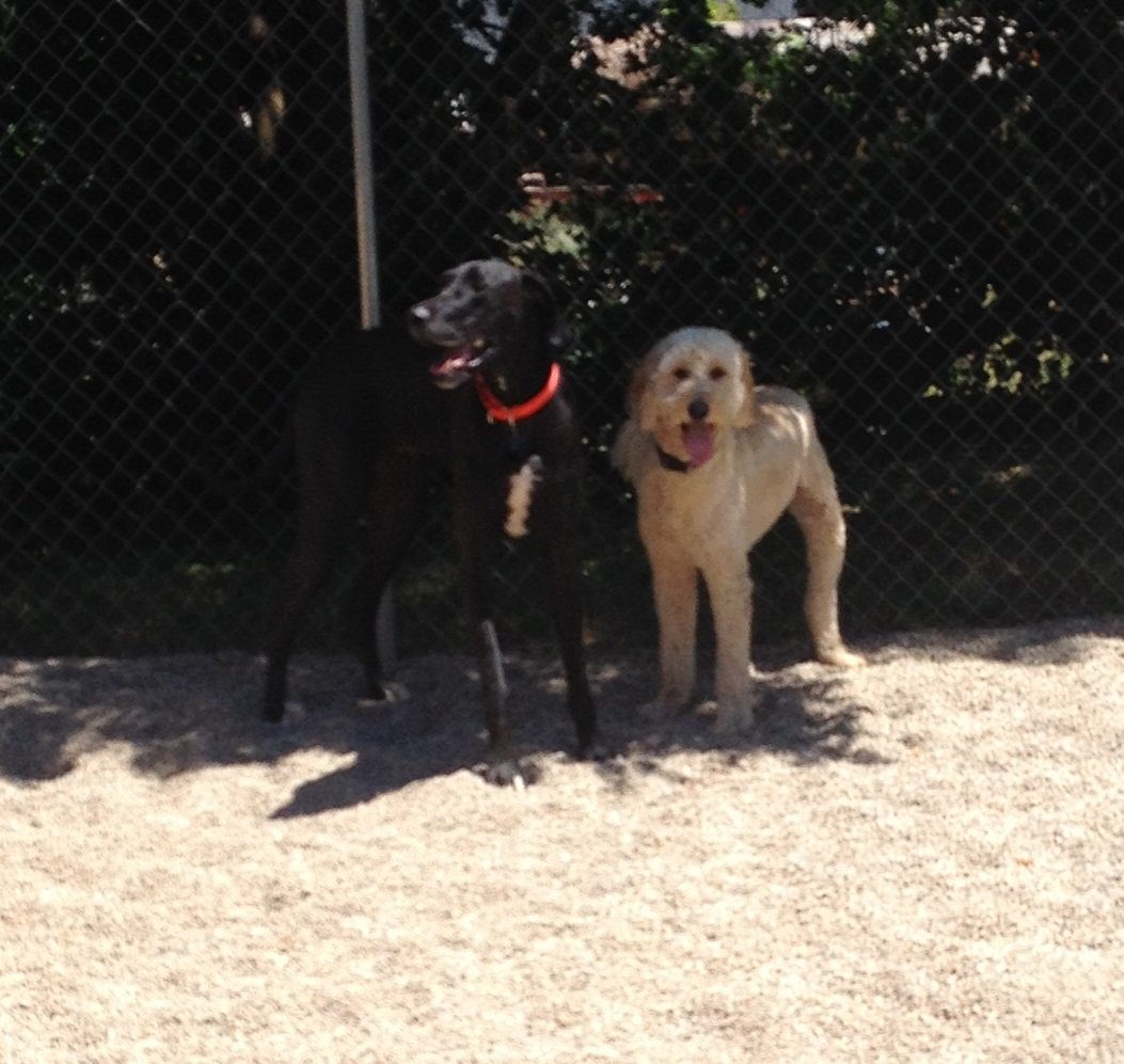 Zeus and Clancy hangout in the shade!