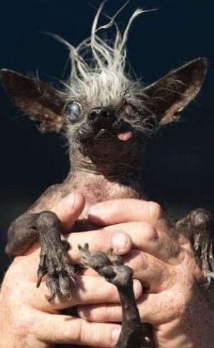 Blind dog with oozing sore wins World's Ugliest Dog contest #LiveonNews9 FULL STORY: https://t.co/iMLuxy4Wtc https://t.co/gW7SkgJgMn