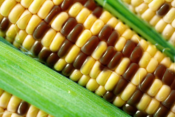 .@FMI_ORG , GMA applaud Senate agreement on national #GMO labeling standard https://t.co/DnTOFecTT2 via @SN_news https://t.co/MD3xniY5DU