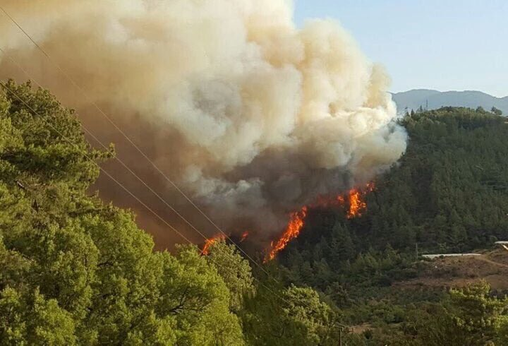 """Résultat de recherche d'images pour """"vatan ormanları yakılıyor"""""""