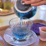 【乙女必見】魔法の世界に迷い込んだような青い紅茶・ブルーマロウの魅力に迫る!