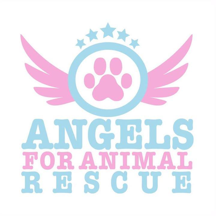 RT @teacuptutucharm: Be an Angel for @angels4animalre @joannakrupa @romain_zago 💙 Donate today at https://t.co/FmqTrLOEXE xoxo #adopt https…