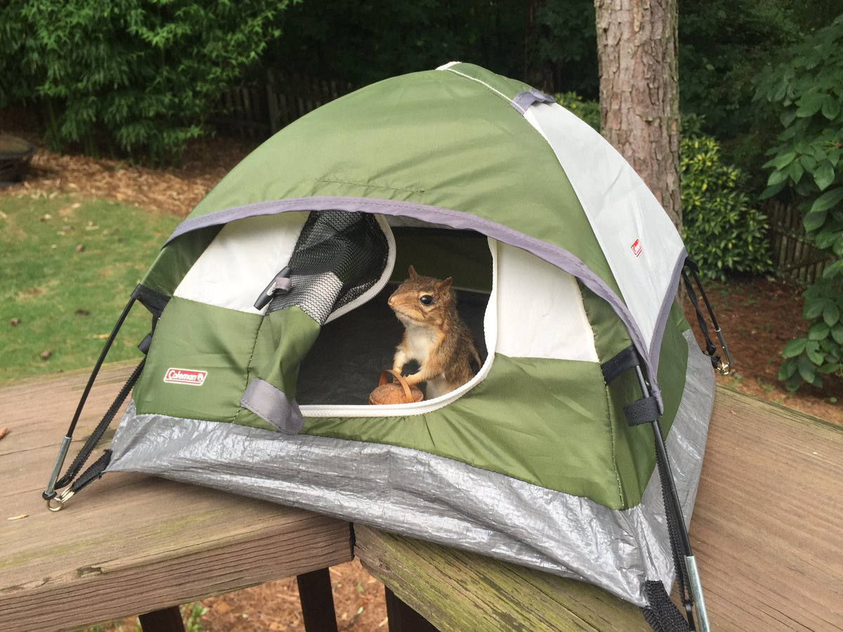 AJ Willingham on Twitter  I bought a tiny display tent from the Sports Authority closeout and this is why I should never have money.u2026   & AJ Willingham on Twitter: