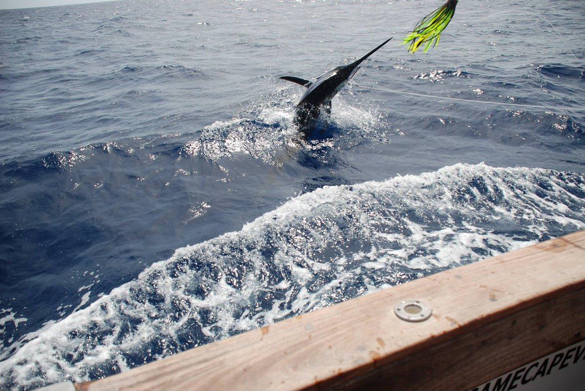 Cape Verdes - Dimeu went 2-3 on Blue Marlin (600,200)