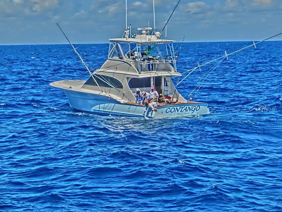 Contango Sportfishing Charters (North Carolina & Maryland) https://t.co/Qq6iq305VI