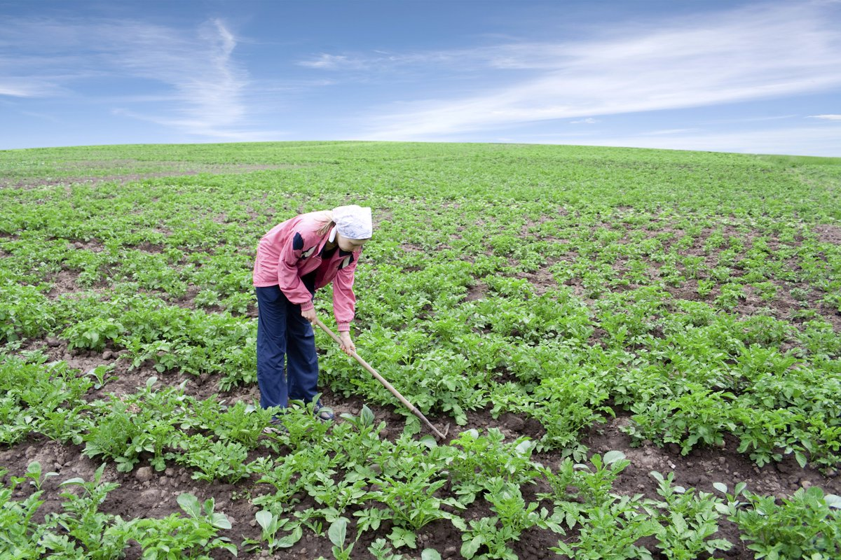sustainable agriculture The sustainable agriculture and food systems short term certificate of completion is designed for both aspiring farmers and community leaders interested in learning how to work in a regional food system in the areas of advocacy, education, production, and nonprofit service.