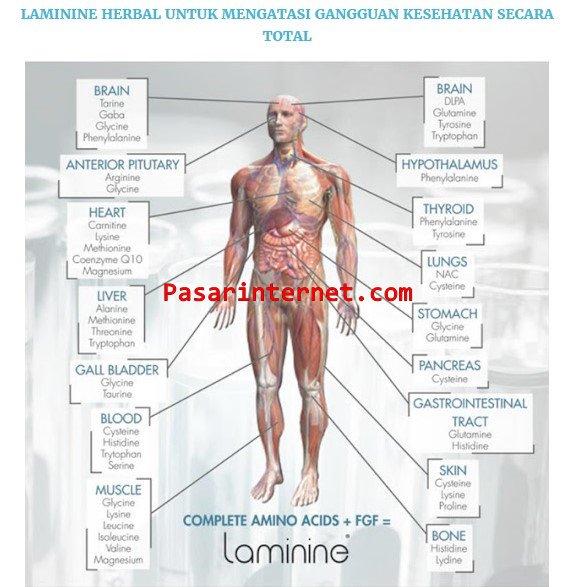Laminine Nutrisi Herbal Untuk Memperbaiki Kesehatan Secara Total