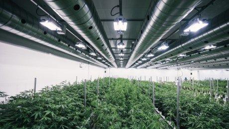 Looming Canada Post work stoppage has medical marijuana producers scrambling