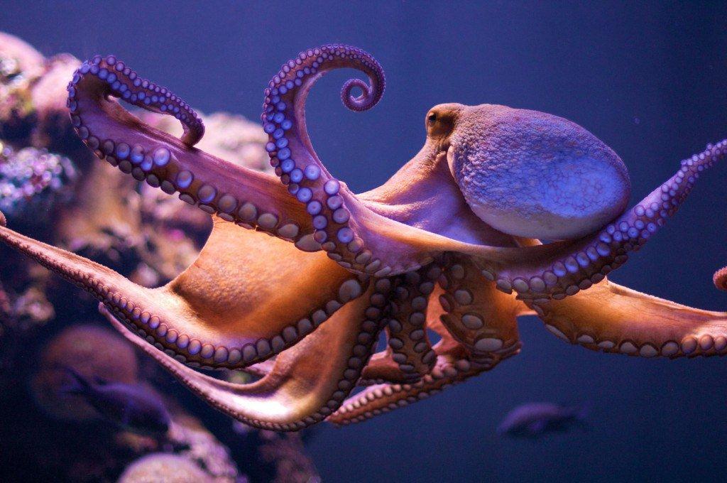 Alieni sulla Terra: Octopoda ha origini extraterrestri