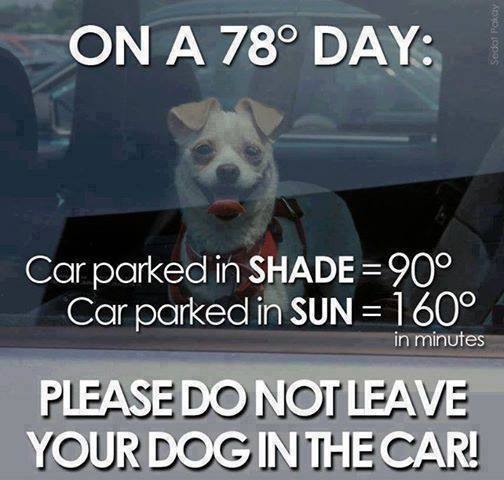 DON'T LEAVE DOGS IN CARS(even in shade w/window cracked)They don't sweat & can BAKE to death https://t.co/0o1PYxF13O https://t.co/DTM9v10dPE