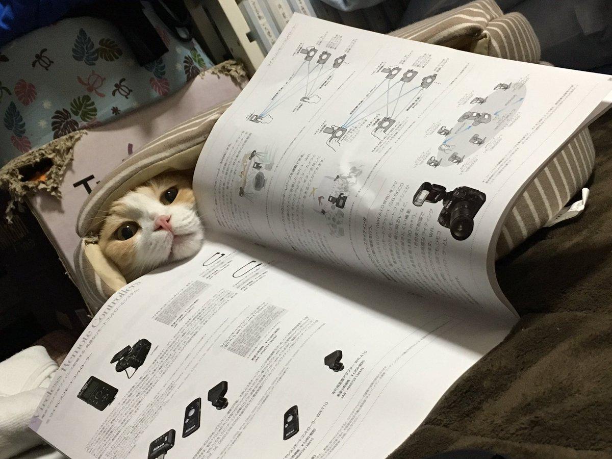 昨日カメラのパンフ読んでたら寝床塞いじゃってて隙間から顔出してきたww pic.twitter.com/mKOxvrBg1w