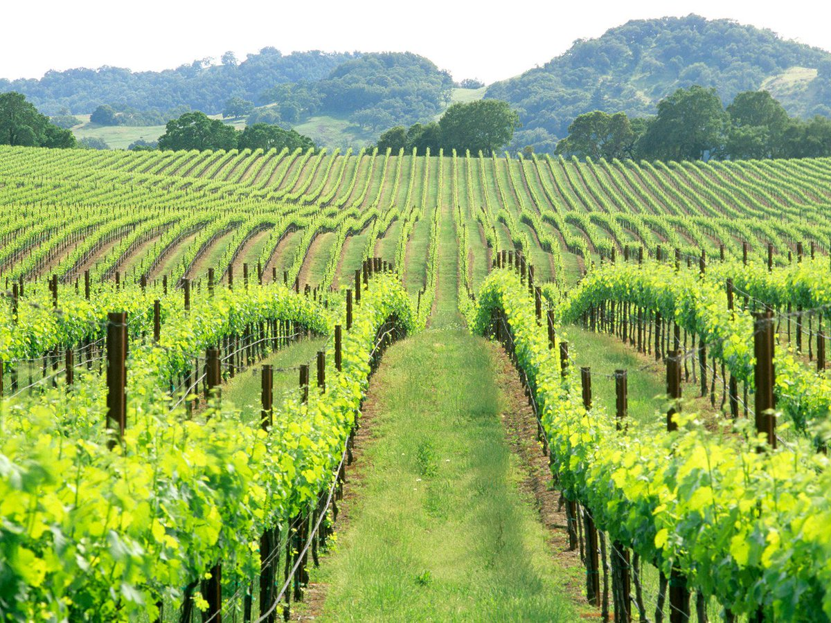justfly on twitter check out our crazy prices to napavalley