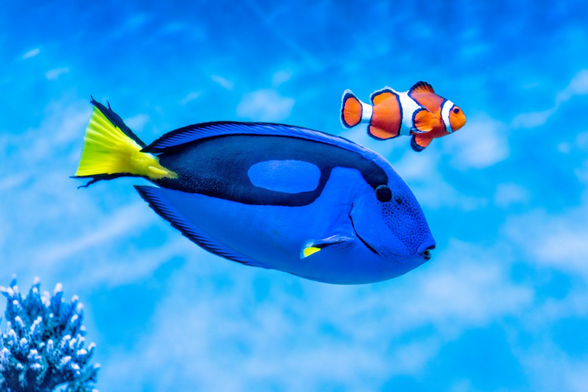 Before you go see @findingdory, discover ways of protecting Dory & other sea life: https://t.co/kh6FE6hjrf https://t.co/EEHcHQRSgN