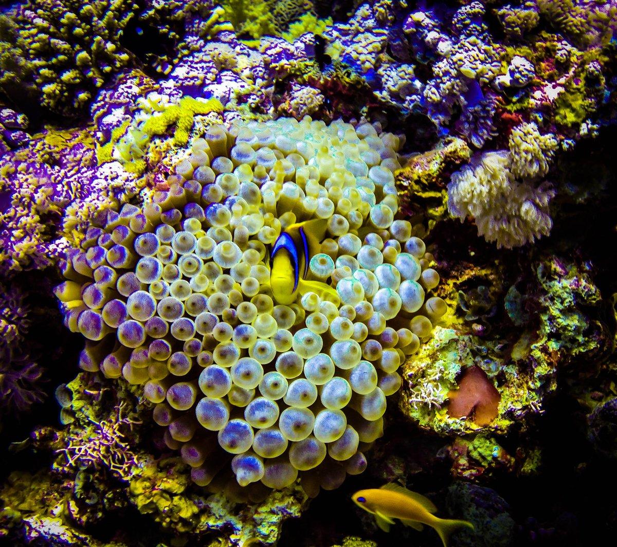 art of s diving theartofs twitter art of s diving followed