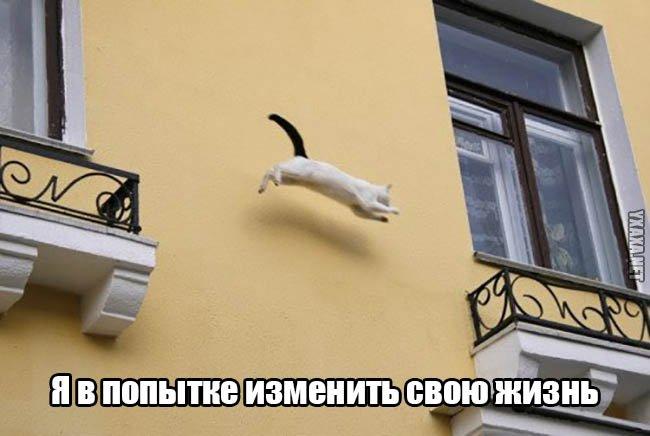 Ложкин договорился о стажировке выпускников Гарварда в Украине - Цензор.НЕТ 236