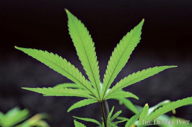Did Microsoft just jump into the marijuana business?