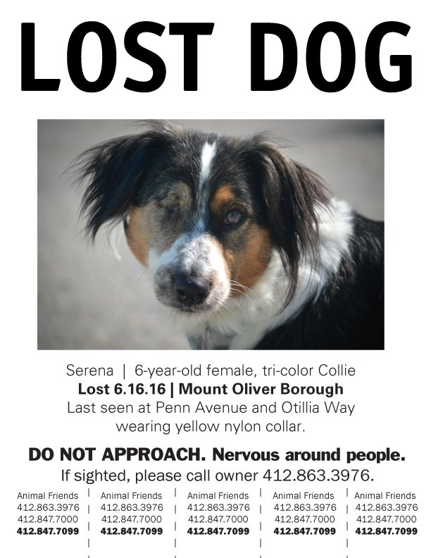 URGENT - Serena was lost from her new home yesterday and needs your help to find her way back. Please Retweet! https://t.co/NJt97kKmne