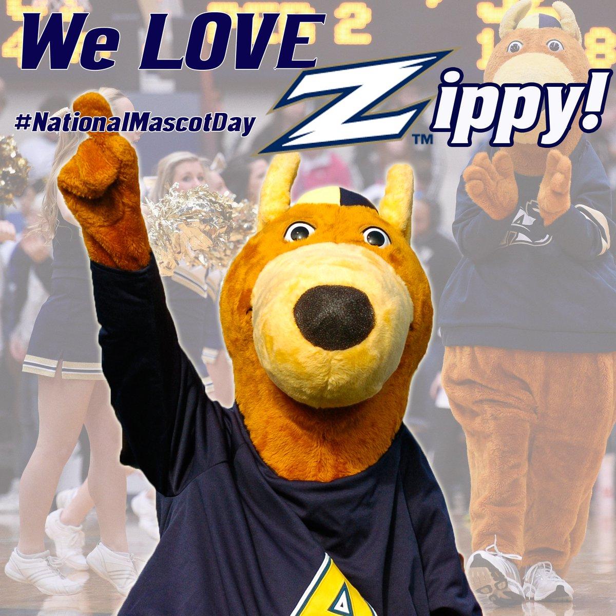 akron zips on twitter the university of akron zips salute zippy