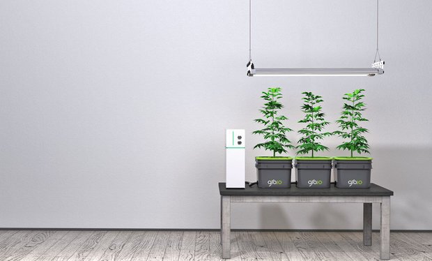 Cannabis Joins the Internet of Things. Now its Easy for Everyone to Grow