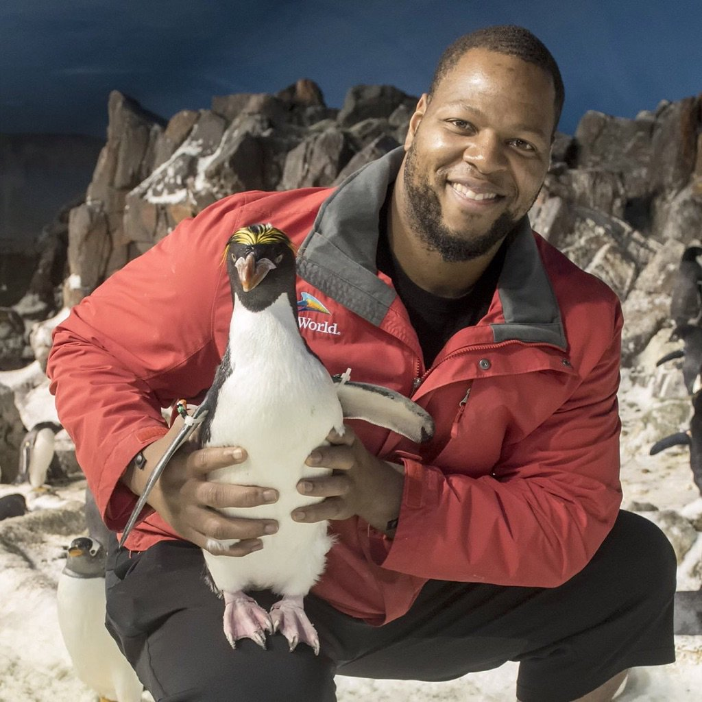 #flashback #friday @ndamukong_suh at the San Diego Zoo with penguin. (3/28/16) #suhsquad #ndamukong #nfl #miami<br>http://pic.twitter.com/7TMSASxfuf