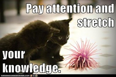 A #growthmindset cat for #Caturday: Pay attention and stretch your knowledge. https://t.co/0MJO8PCarq #MindsetPlay https://t.co/DjSrbBJaIg