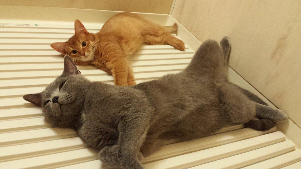「風呂のフタの上は温かい場所だと信じきっていた猫が、冷えたフタの上に乗った時の表情」についてのブログ書いたのでぜひ読んでみて下さい!nekonavi.jp/catblog/archiv… pic.twitter.com/2TIDgE7a2B