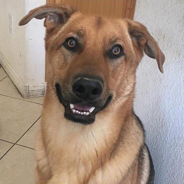 SOUTHWEST LAS VEGAS AREA. MISSING DOG. PLEASE HELP. https://t.co/sDg8rK0fbY