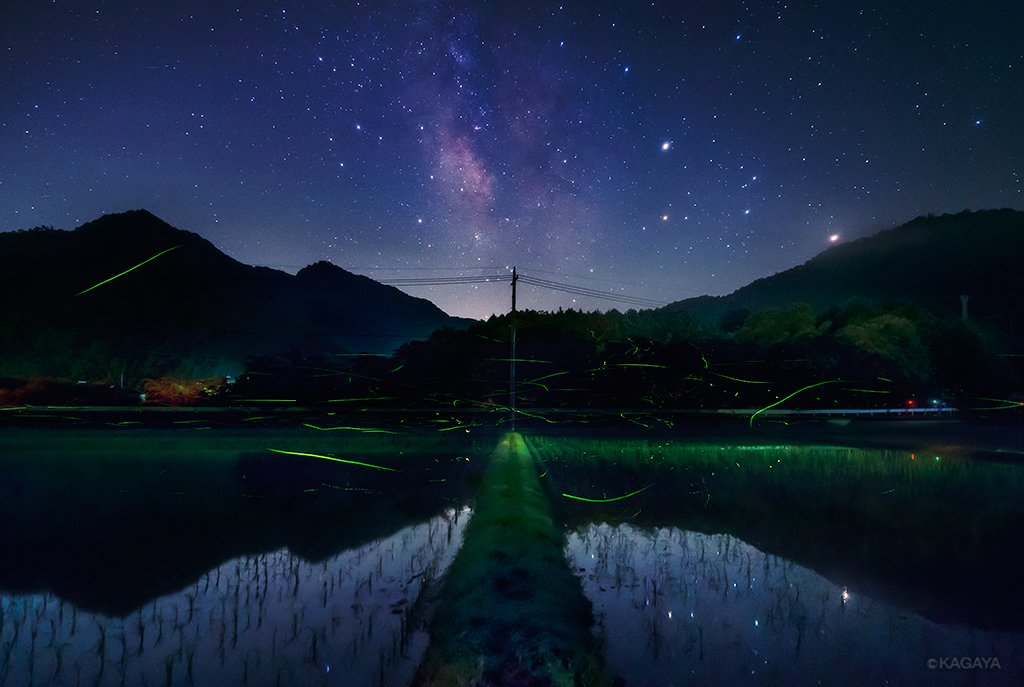 梅雨本番に入ったようで、わたしの今年のホタル追っかけも終了です。星空の下でたくさんの蛍火に囲まれた夜。また来年。 pic.twitter.com/KbvJiAWJqP
