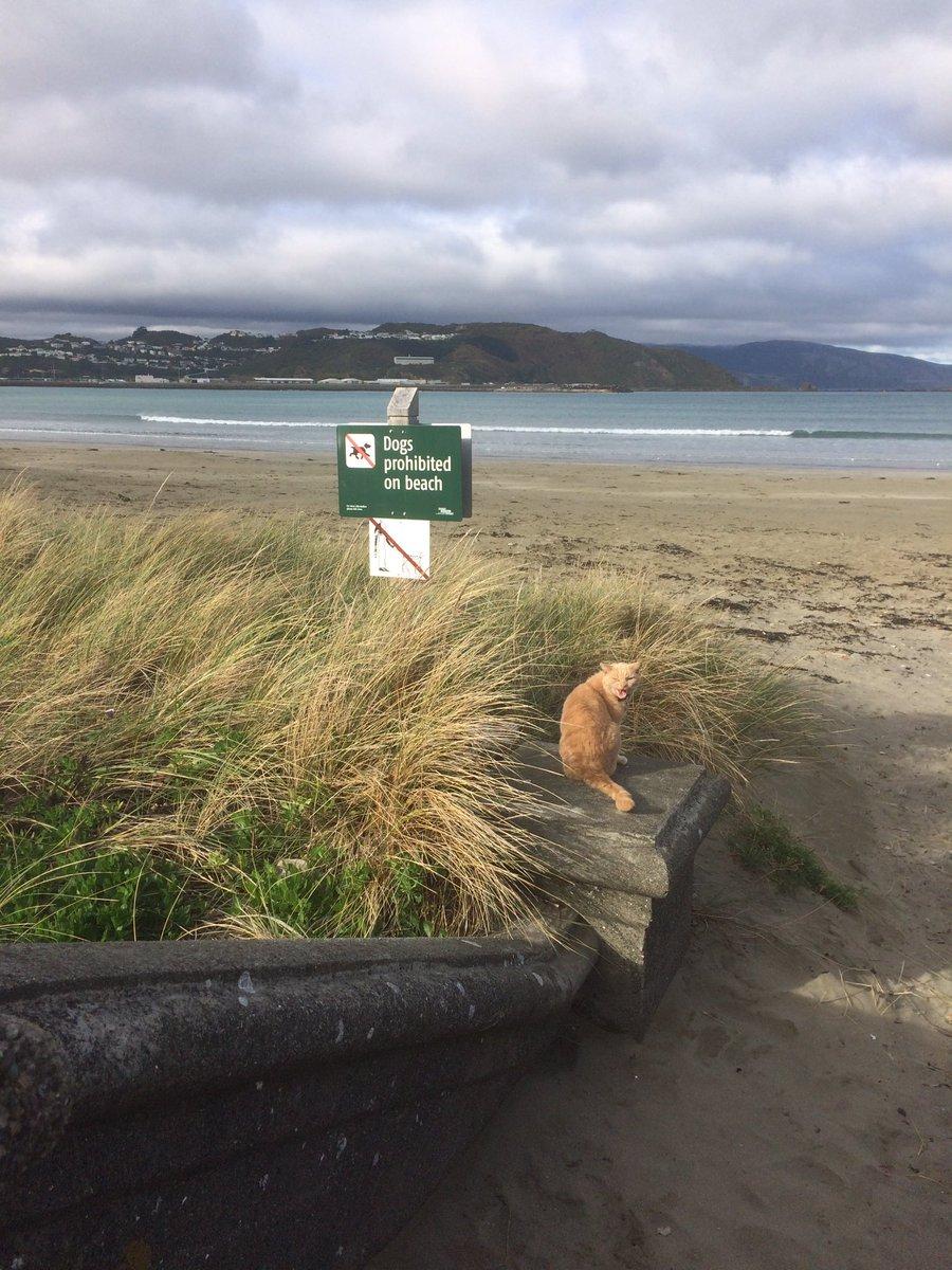 Is this the smuggest cat in Wellington? https://t.co/kFLJ4D85u3