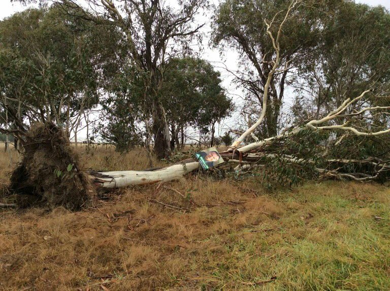 In New England, trees would rather uproot themselves than be seen supporting a Greens candidate. #ausvotes  #auspol https://t.co/ec6ylBHQbM