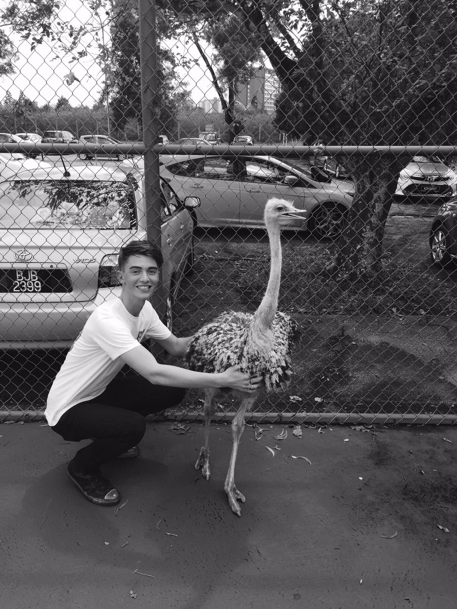 Just casually hanging out with a fucking ostrich in Malaysia  #Chickaboo https://t.co/uxkxZuOLNA