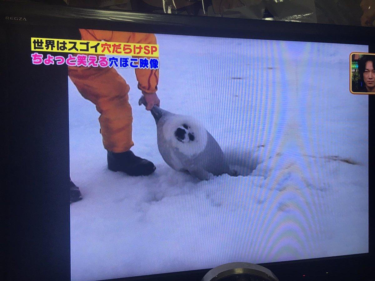 テレビに溺れたあざらしが!!!! https://t.co/ITVmlQ3YWg