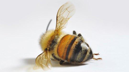 Pls sign & RT: Tell @EPA to ban bee-killing pesticides NOW! https://t.co/Cg0ASx0Rsu #BanNeonics #SavePollinators https://t.co/zi3Q5dofjP