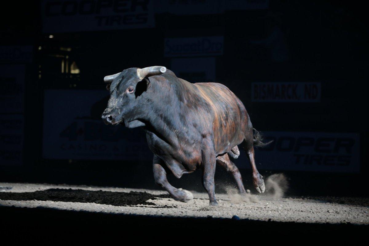 asteroid bucking bulls - HD1200×800