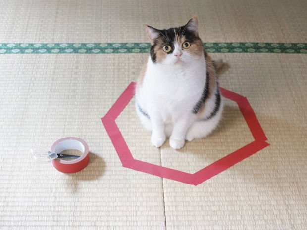 #CatsAgainstBrexit because they love red tape https://t.co/d2V6K0hJ7o