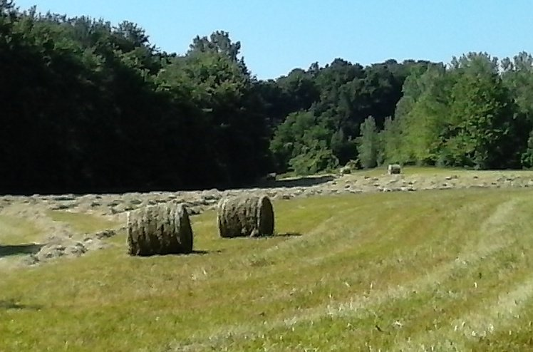 Hi #plantchat, great weather for baling hay! https://t.co/XLrmYmVMv7