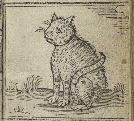 smutny kotek jest smutny ;(