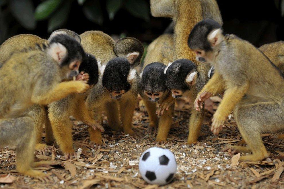 Открытки юбилей, наша сборная по футболу приколы картинки