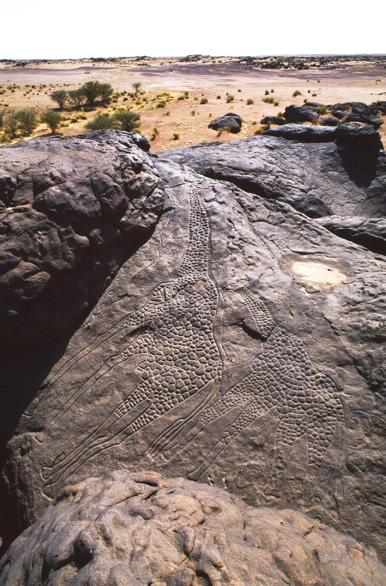 the worlds largest rock art petroglyph dabous giraffe - 750×1138