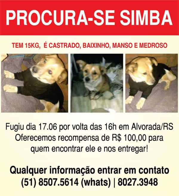 Simba, cachorrinho perdido em Alvorada/RS. Info: https://t.co/qTiV09lZ8j https://t.co/L9nmg3zdUH